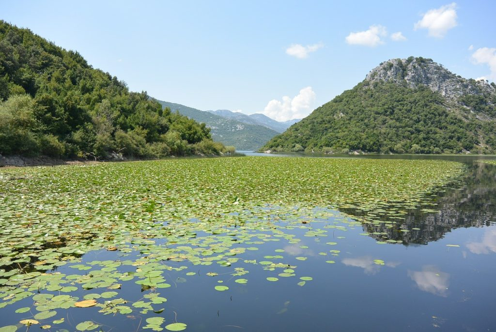 Clark Weeks Travel Info Montenegro - Lake Skadar